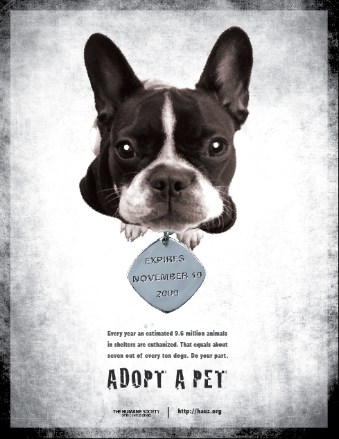 Cargo Collective  Pet Poster