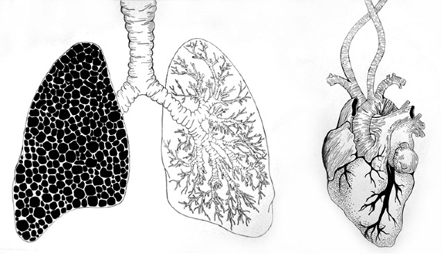 gallery for gt heart and lung drawing