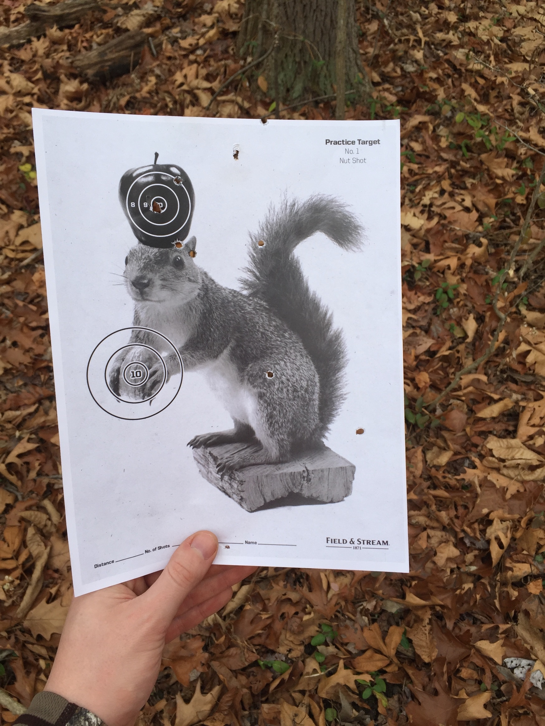 photograph about Printable Squirrel Target identify Market Move : Printable Ambitions - Dan Magdich : Director