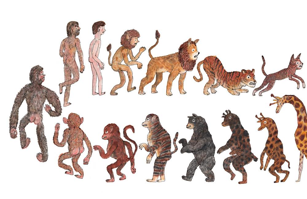 evolution of animals - 1000×650