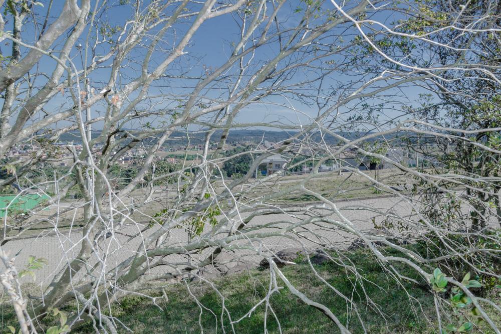 Olive tree garden brazil arnaud delecolle for Olive garden manhattan beach ca