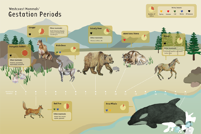 the gestation perod for all mammals is