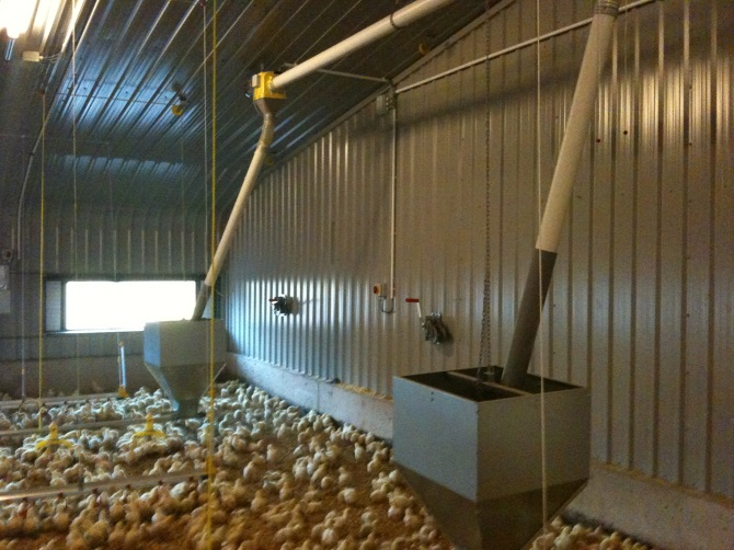 FEEDERS - BROILERS - BILDABIN