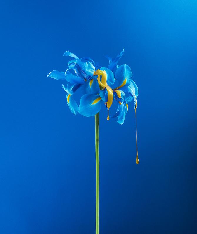 La particolarità sta nell aggiunta grafica della vernice che cade dai  petali 14658006643
