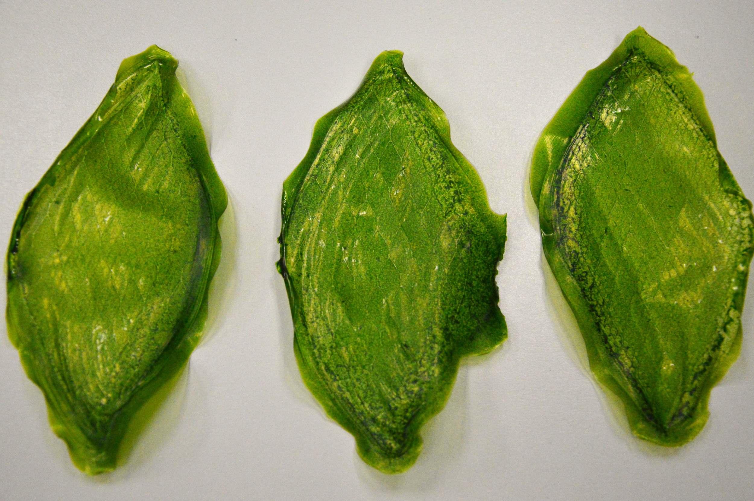 Silk Leaf - Julian Melchiorri