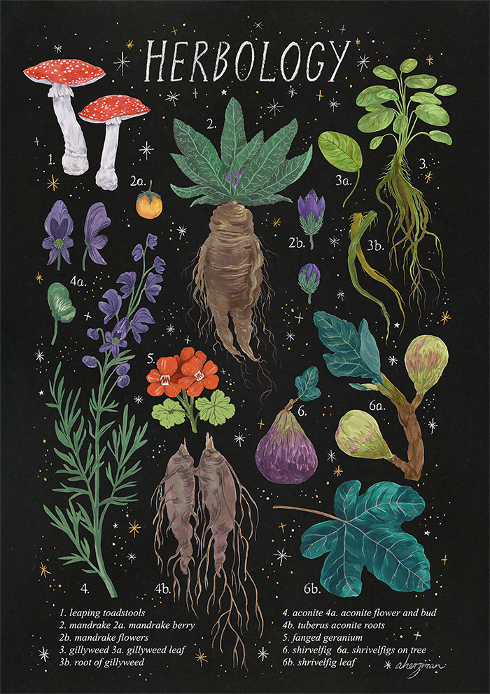Herbology Amanda Herzman