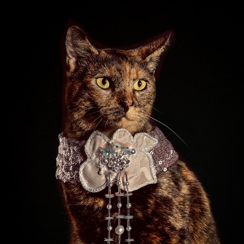 The Elizabethan Cat Collars