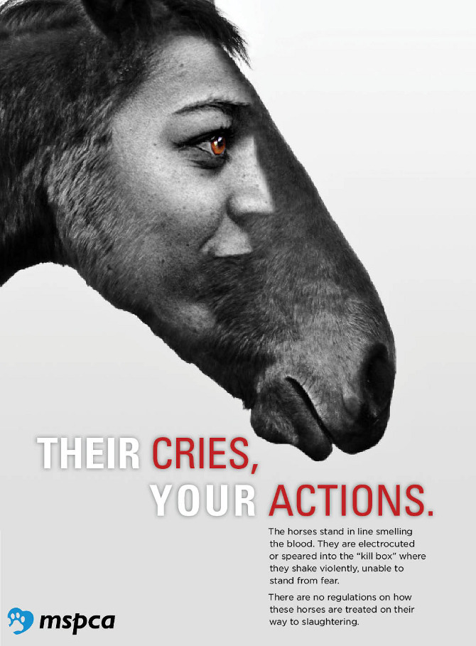 MSPCA Poster Series - Shauna Leavitt
