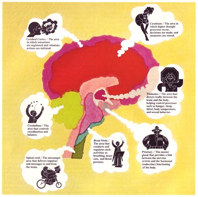 Brain Function Diagram For Kids