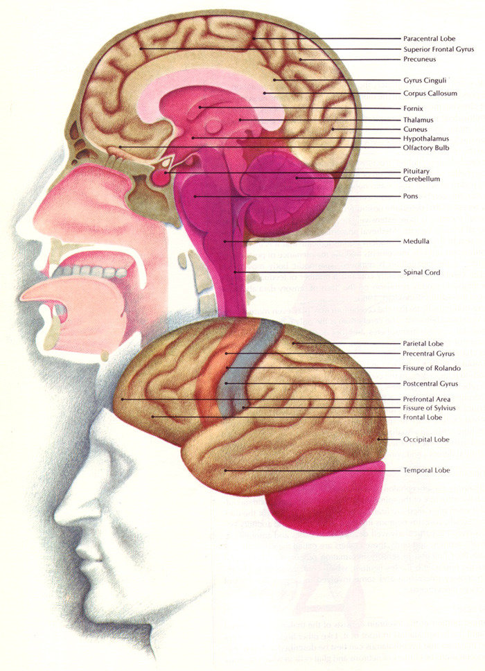 Section 35 3 divisions of the nervous system