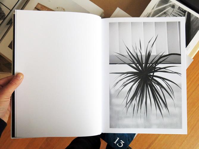 Saskia groneberg buropflanze office plant perimeter books