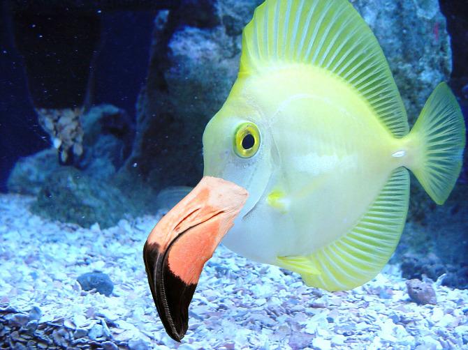 New fish species matthew j giordano for New species of fish