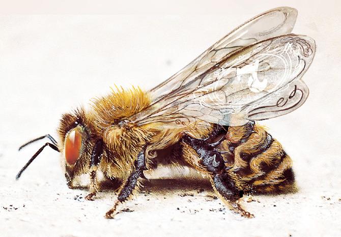 jack daniels daniel oconnell and bees on pinterest