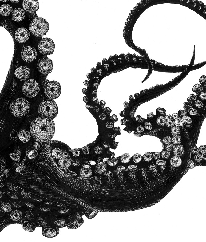 black and white octopus photography