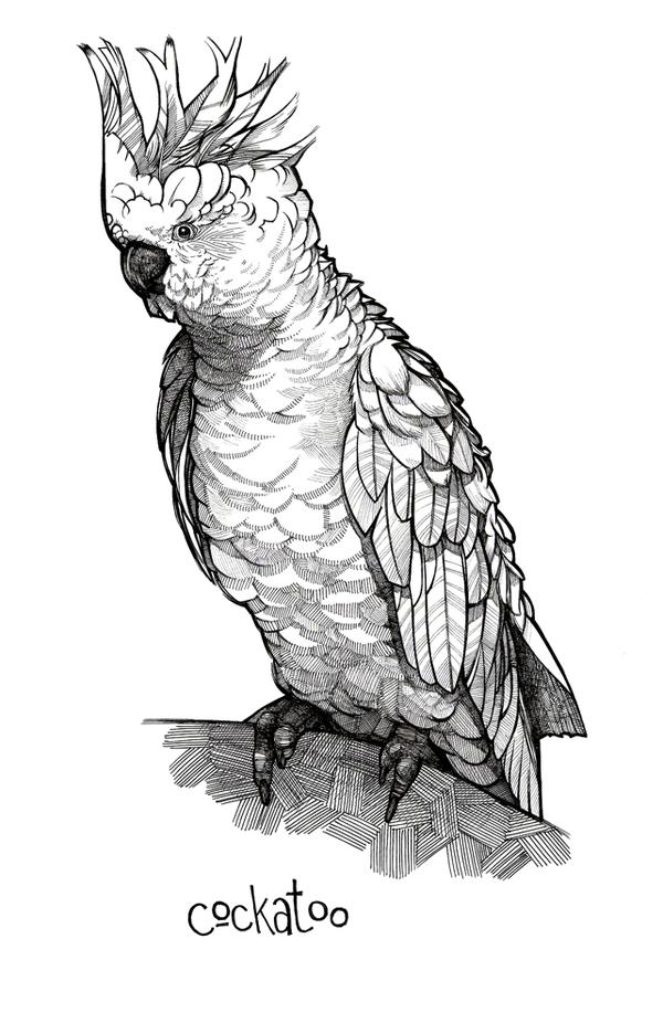 Cockatoo Line Drawing Bird Alphabet