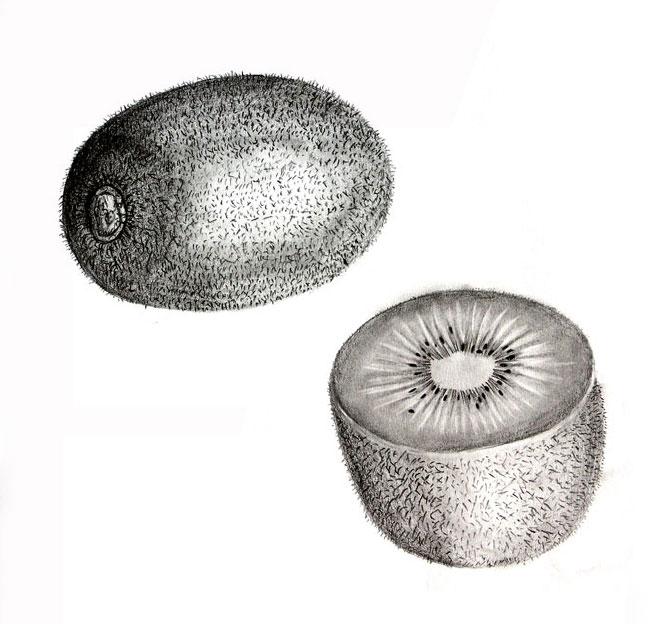 Kiwi Fruit Drawing Previous / Next Image 1 of 3
