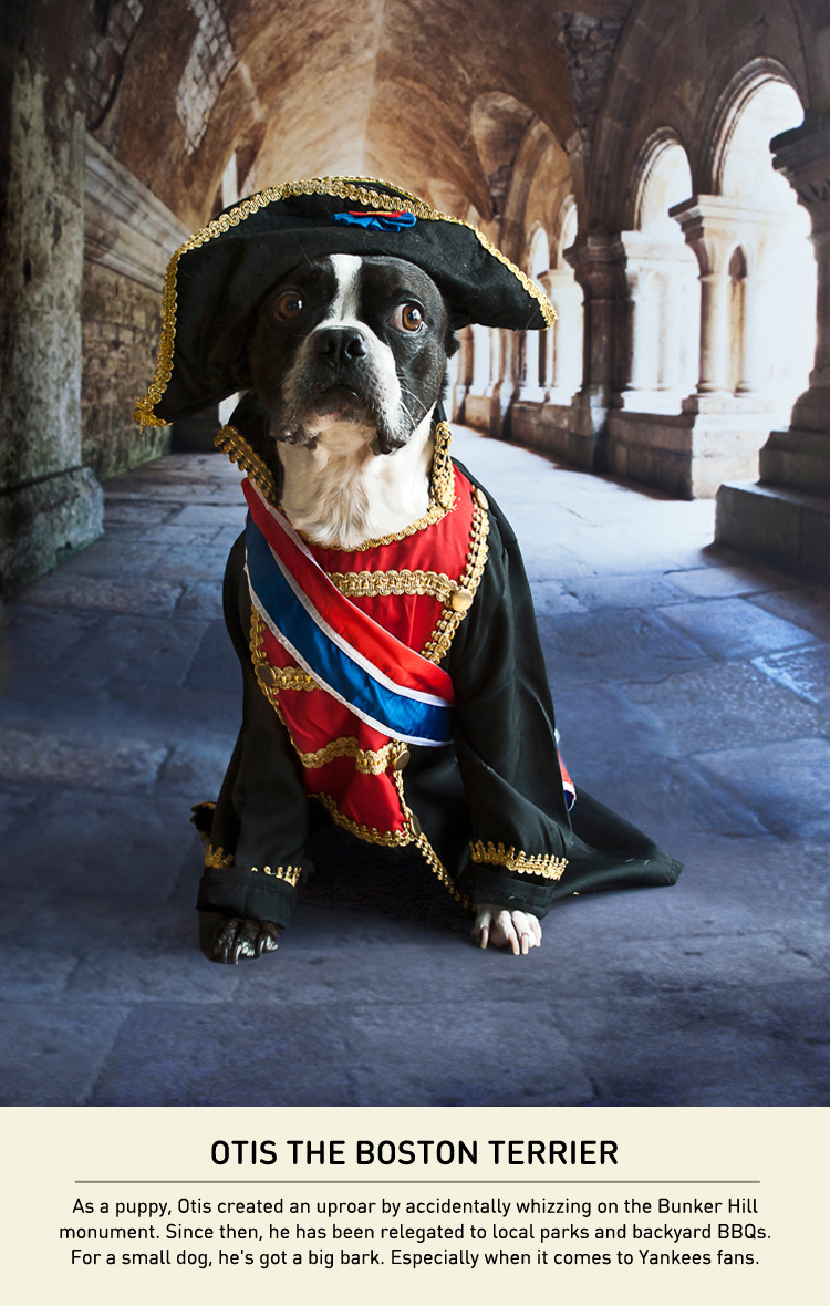 Dogs With A Napoleon Complex - Carmichael Collective