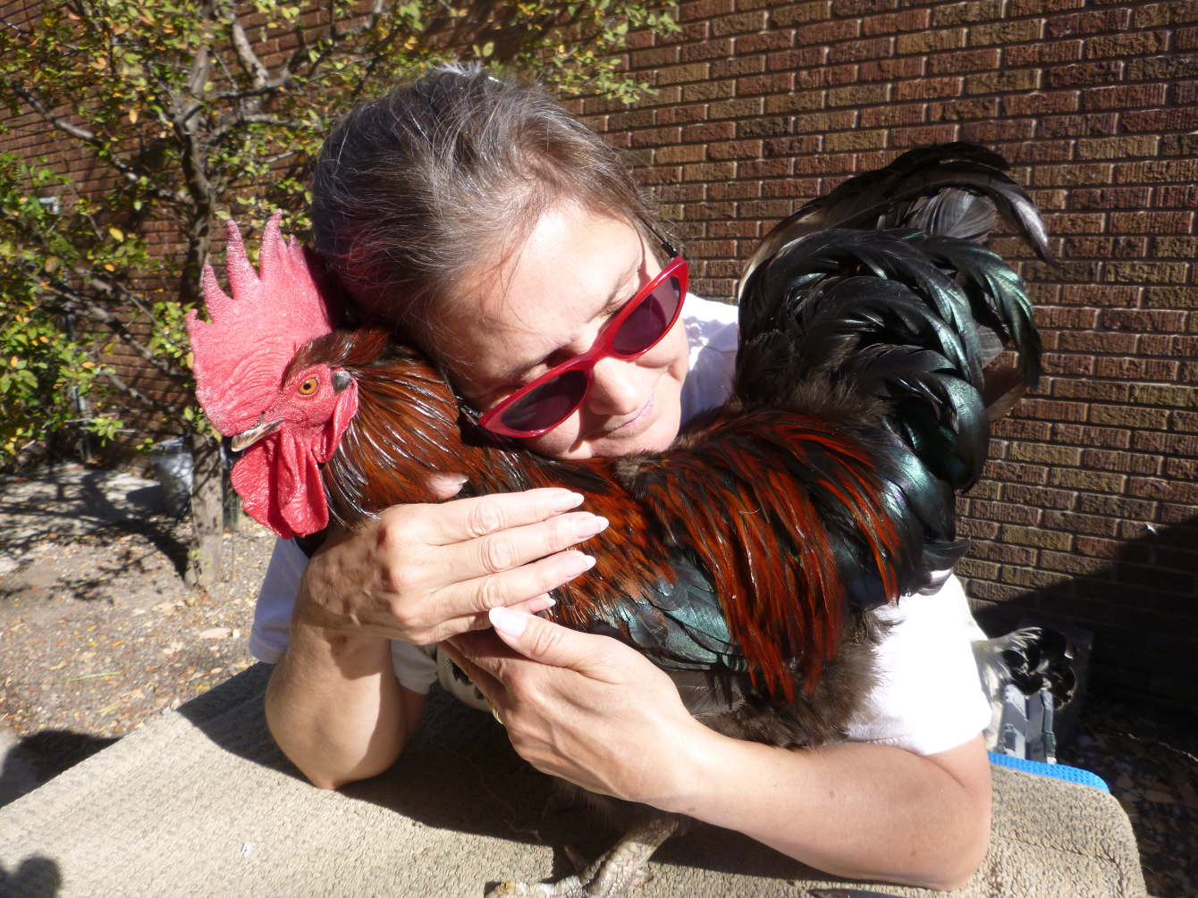 Finding a New Home for a Chicken - CRR
