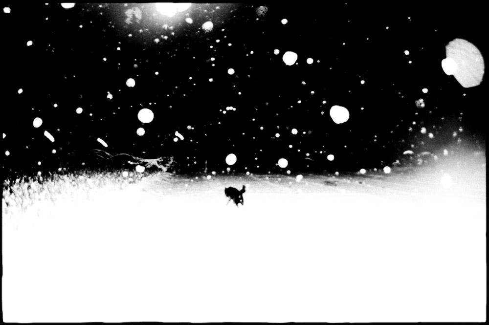 HAJIME KIMURA - MAN & DOG - MUD-MAGAZINE