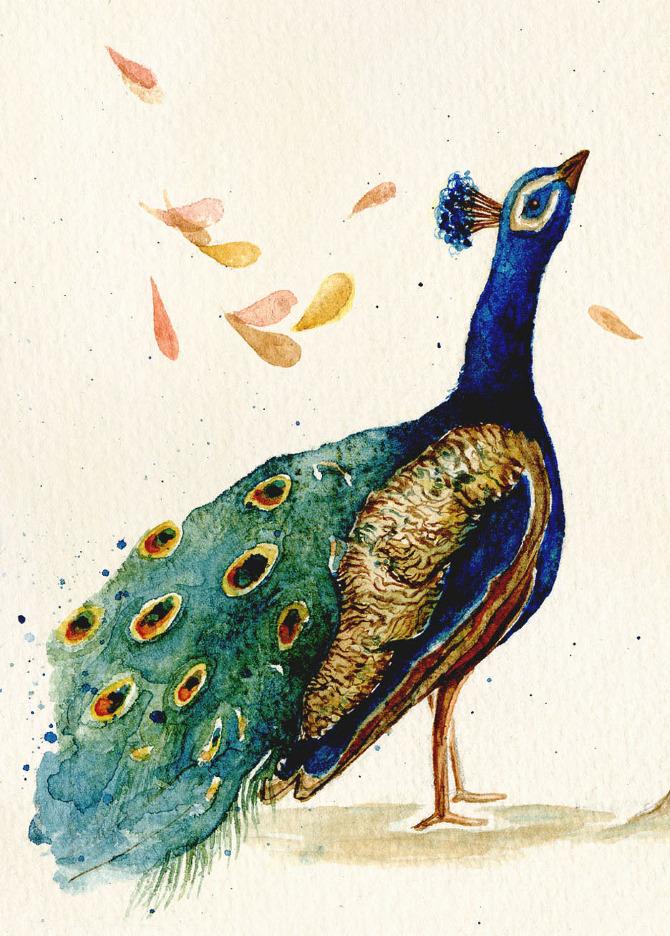 The Peacock S Complaint Rachel Gilbert