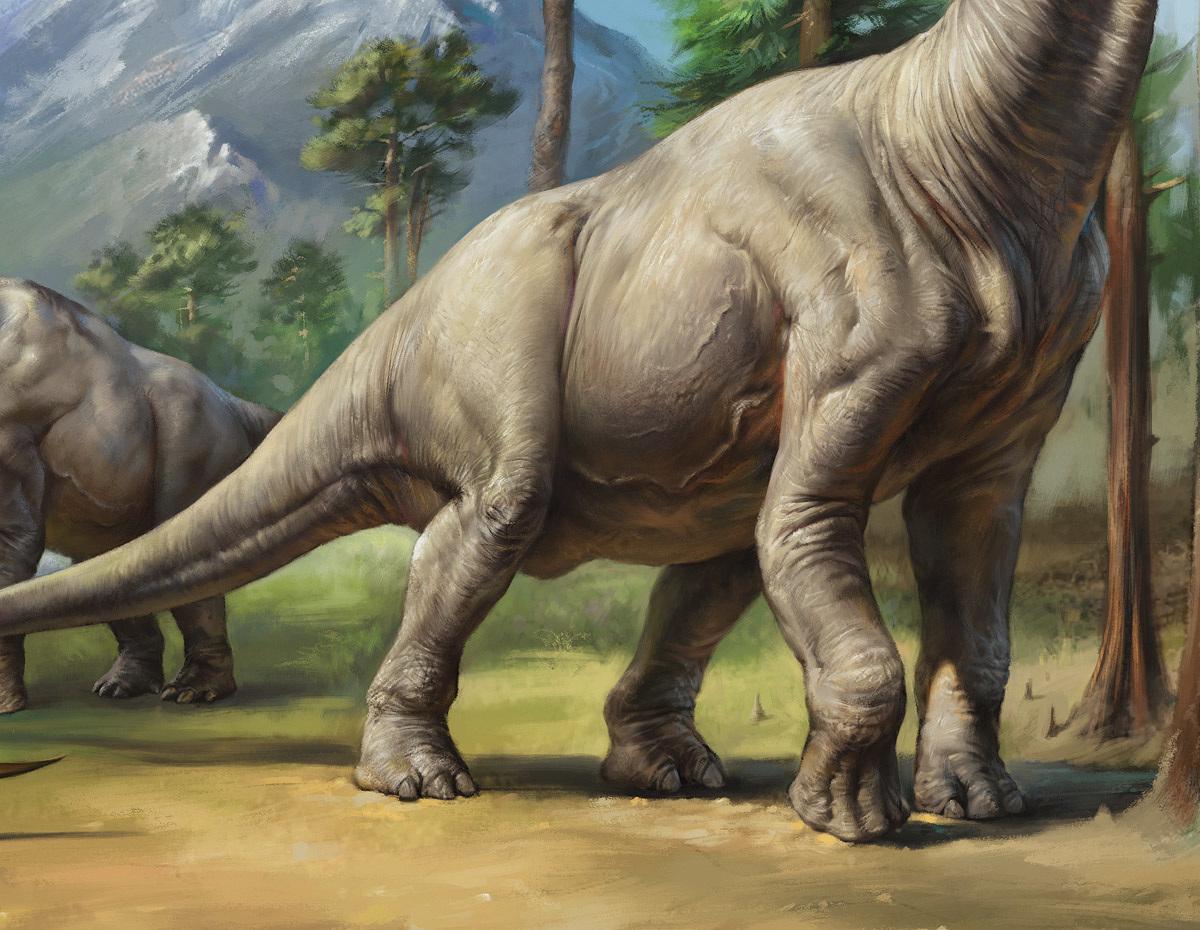 brachiosaurus drawing