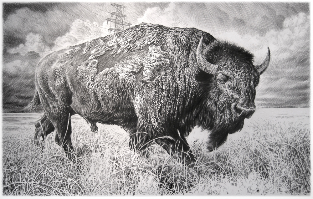 american bison series