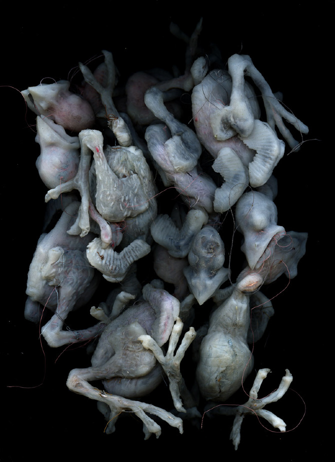 Hatchlings: sculpture - Works of David Scott Kessler